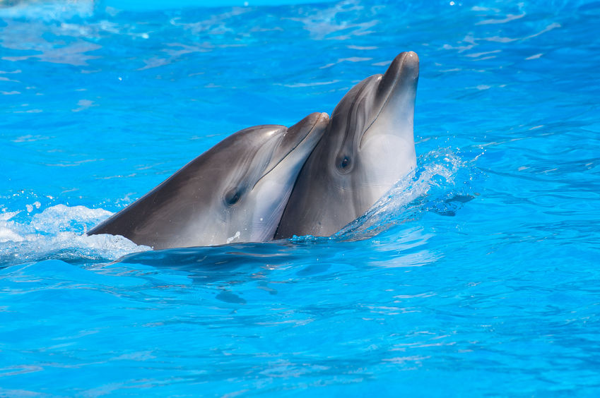 dolphins unconditional love